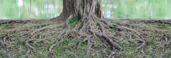 les racines symbole énergie ancestrale et chamanique